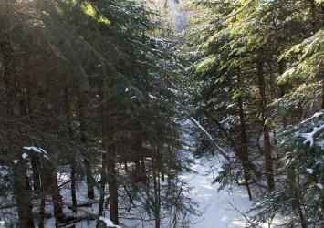 sutton-snow-forest
